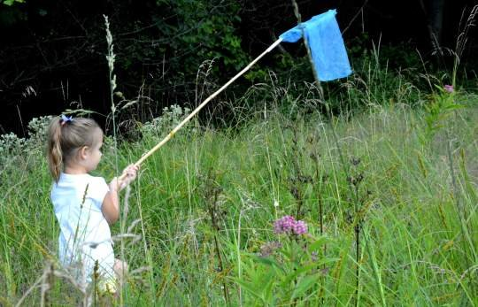 Annual PPG butterfly count to be held Saturday in Monroeville