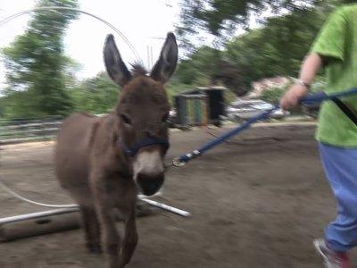 Beasts Unburden: Donkeys Help People De-stress