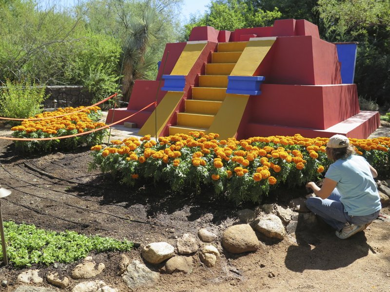 In This Tuesday, Oct. 4, 2016, Photo In Tucson, Ariz., An Employee Of The Tucson  Botanical Gardens Plants Marigolds For The Upcoming Exhibit U201cFrida Kahlo:  ...