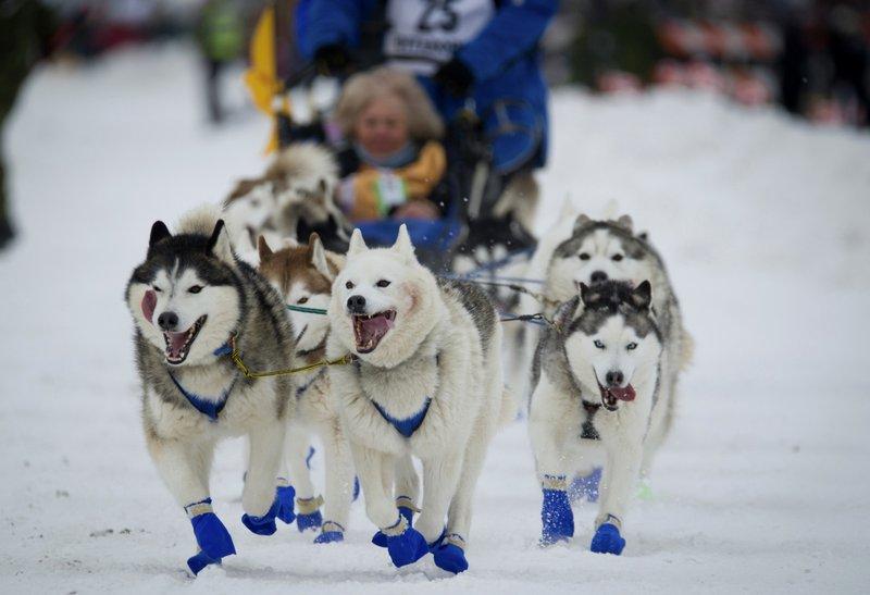 Longtime sponsor of Iditarod cuts ties with Alaska race