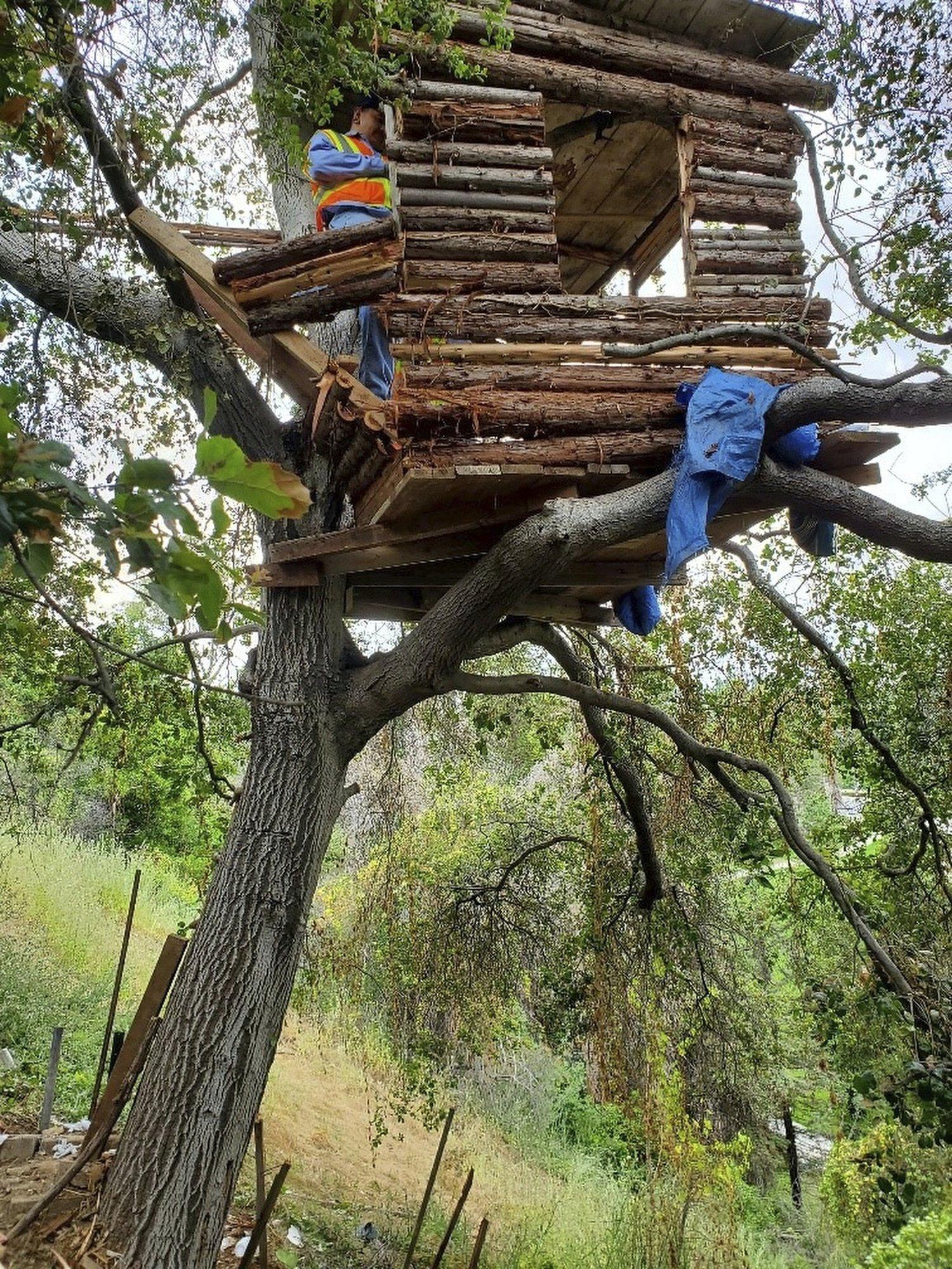 Burglary suspect found living in 'modern' treehouse