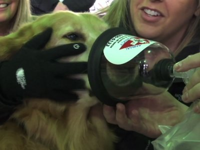 Detroit Fire Dept. Given 800 Pet Oxygen Masks