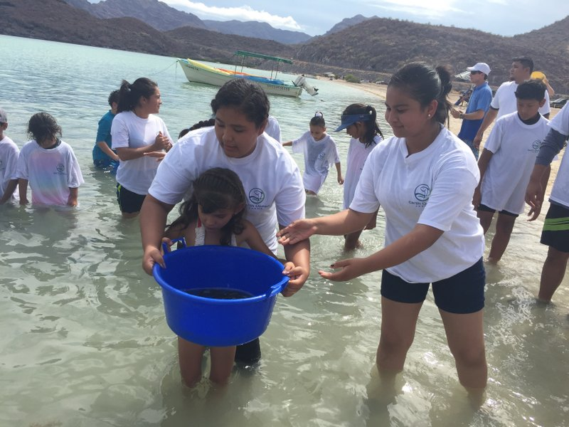 Fourth Release of Totoaba in Baja California Sur: A Unique Alliance Between Government and the Private Sector to Protect a Species at Risk of Extinction