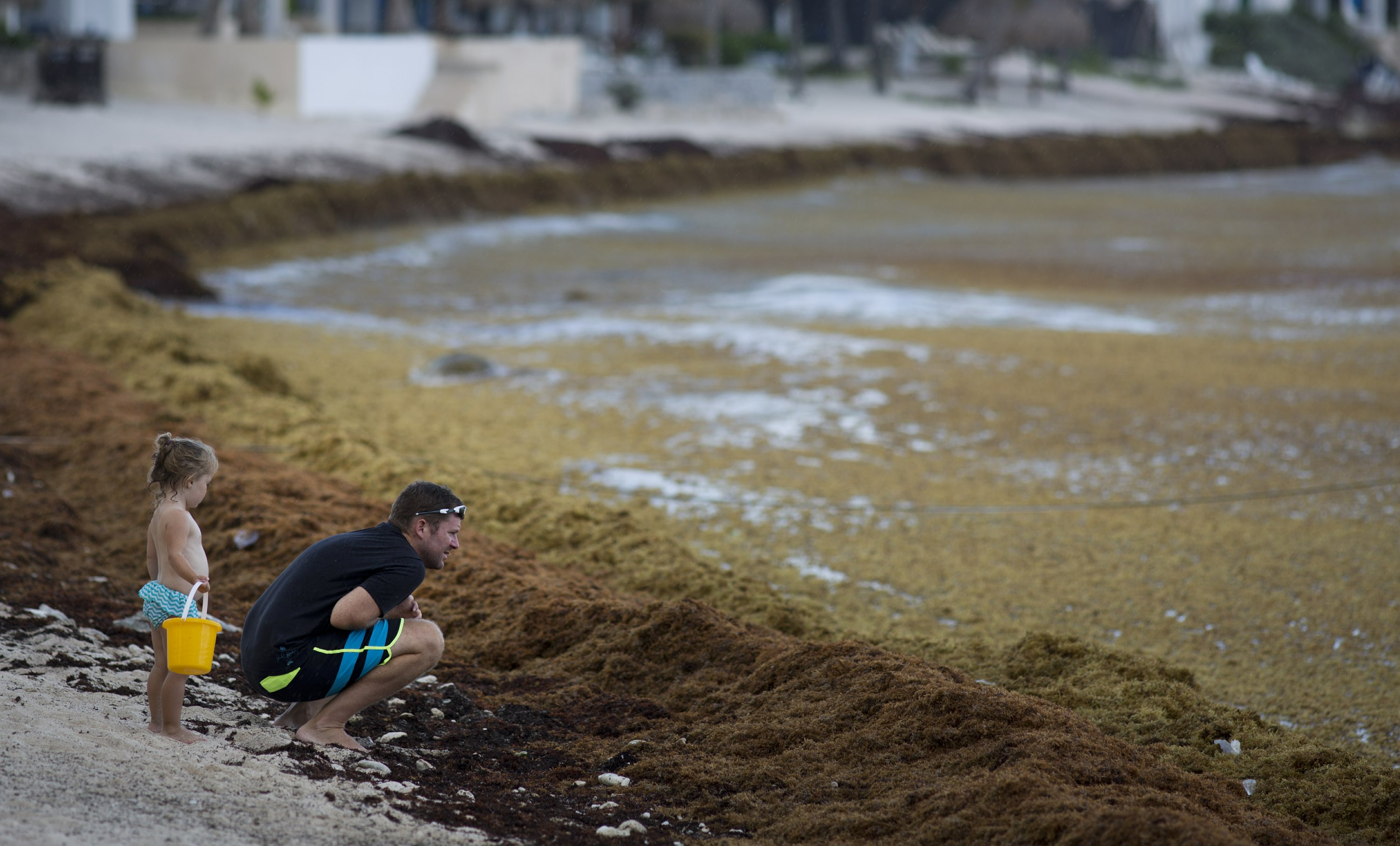 Mexico to build seaweed barriers to protect beaches