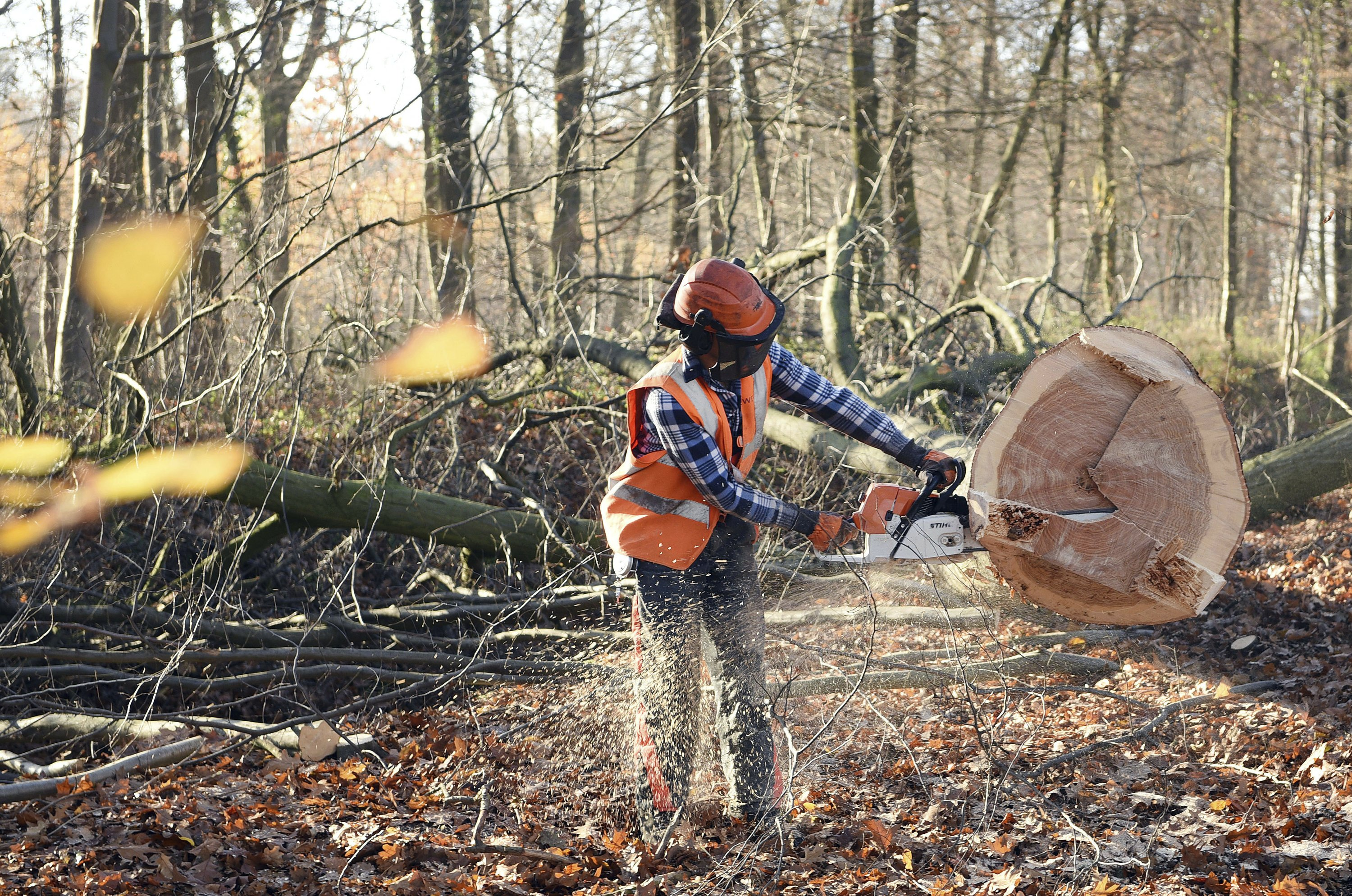 German court: Ancient forest can be cleared for coal mine
