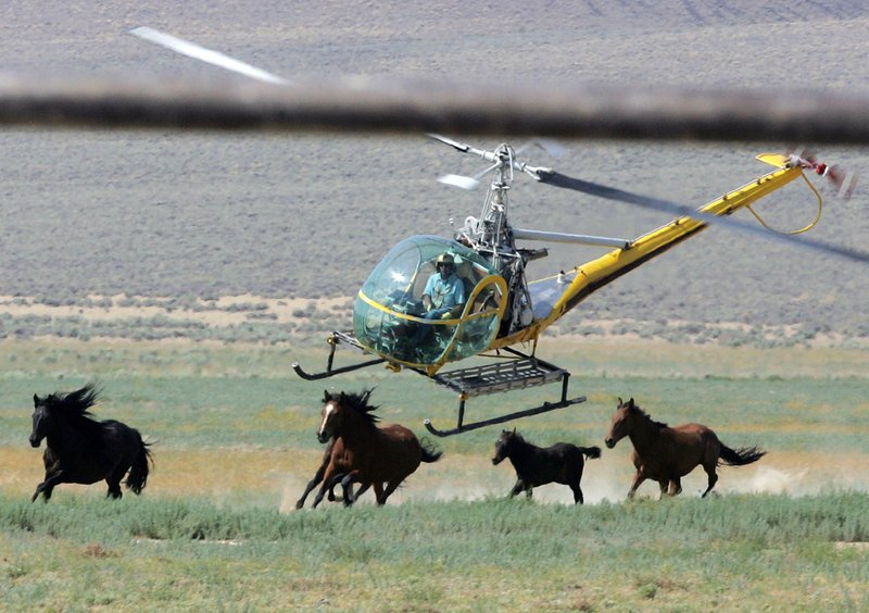 apnews.com - Wild horses could be sold for slaughter in Trump budget plan