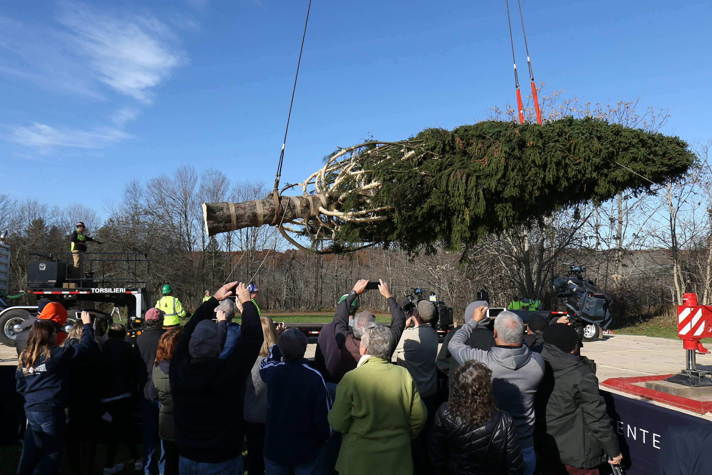 Rockefeller Christmas tree cut down at