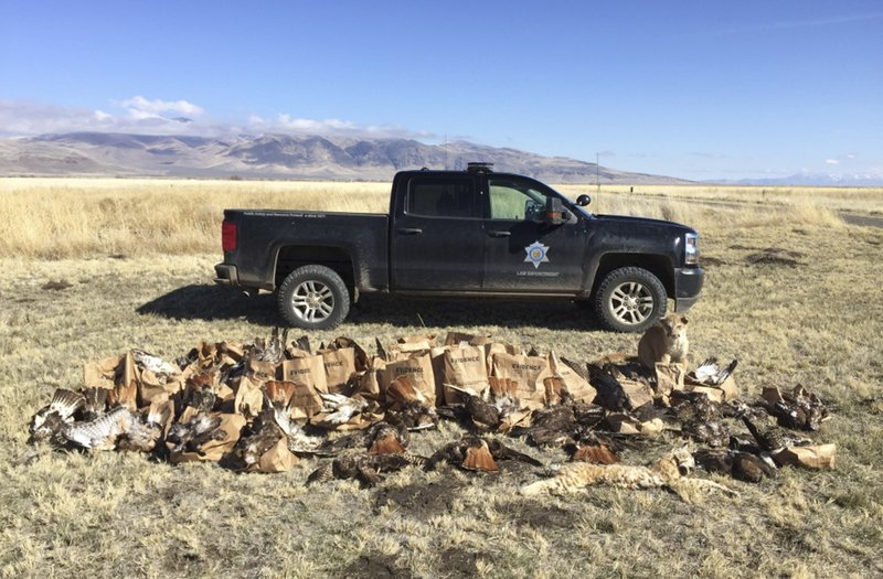 Officials California Man Shot 130 Hawks Birds Of Prey