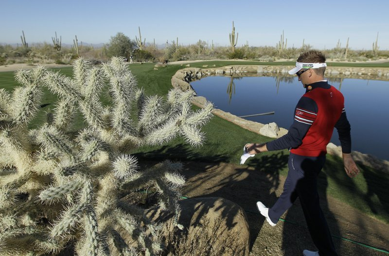 Mojave Desert land purchase to protect 'teddy bear' cactus