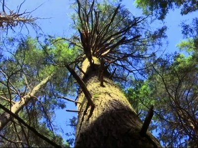 Invasive Pests Jeopardize US Forests, Kill Trees