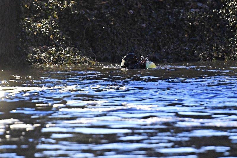 BC-MI-Grand River-Search