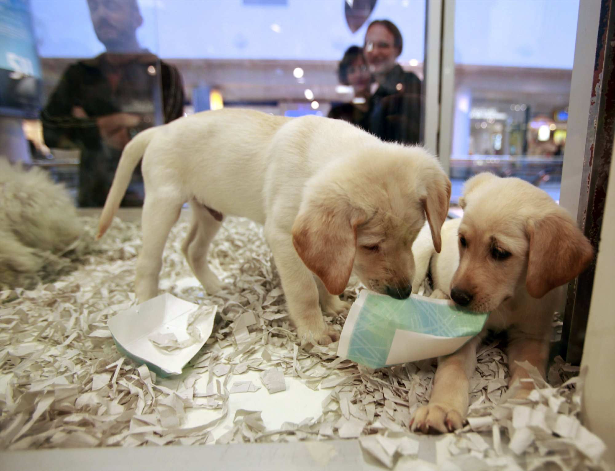 Uk Bans Pet Shops From Selling Puppies And Kittens
