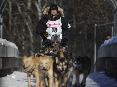 Iditarod CEO Defends Race Amid Doping Scandal