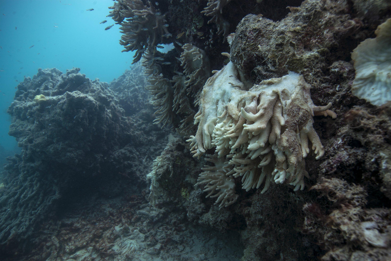 APNewsBreak: Experts demand more effort to save coral reefs