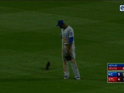 Cardinals-Royals Game Delayed by Cat