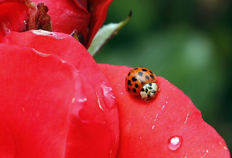 Bye bye bugs? Scientists fear non-pest insects declining