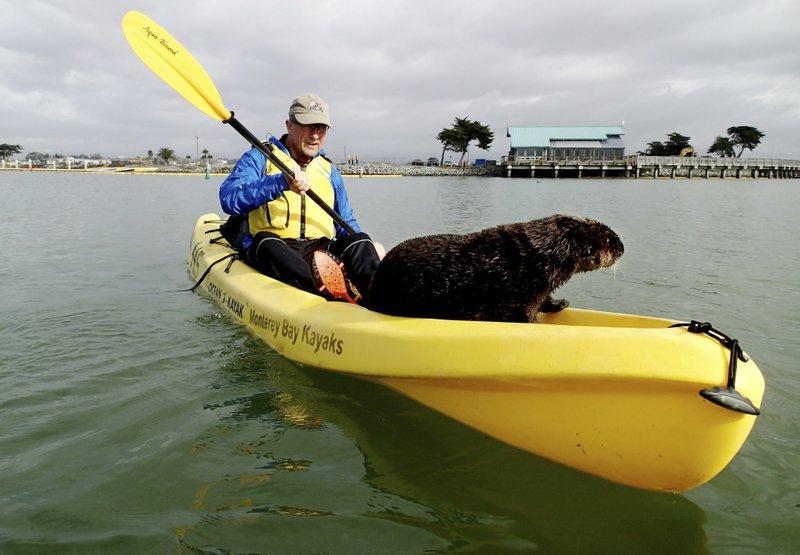 Friendly Otter Jumps Onto Kayak Joins Birthday Celebration