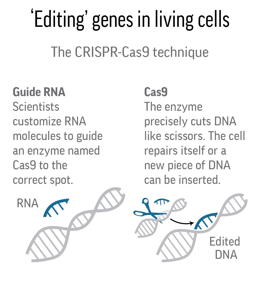 Science Says: Gene editing widely used in range of research