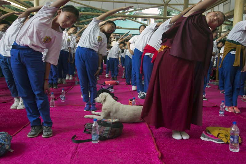 A dog sleeps in the midst of exile Tibetan school children who participate in a joint yoga session at the Tsuglakhang temple to mark the International Yoga Day in Dharmsala, India, Thursday, June 21, 2018. Yoga enthusiasts across the world Thursday took part in mass yoga events to mark International Yoga Day.