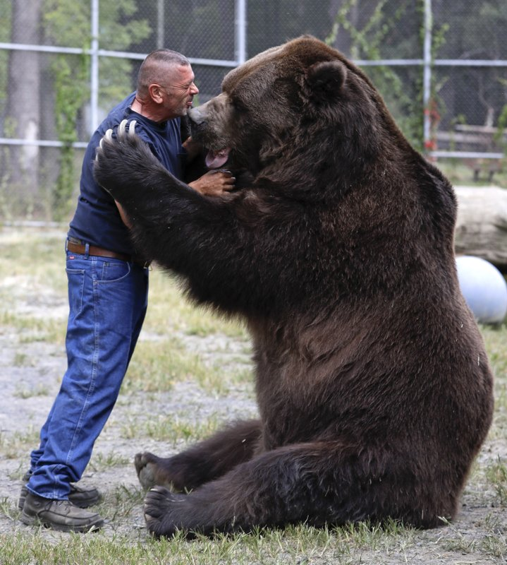 photo of man and Kodiak bear playing