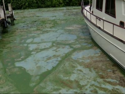 Algae Bloom Prompts Florida State of Emergency