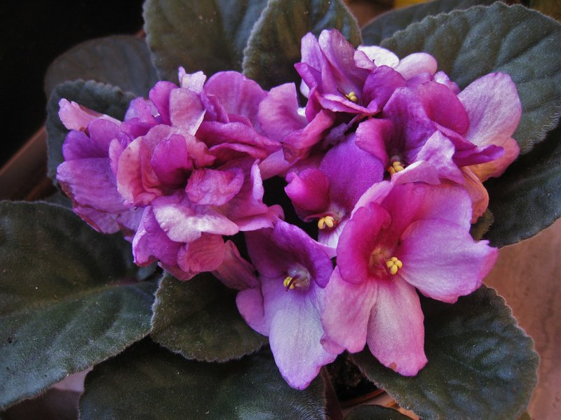 Sarah Browning: Plants Make Great Gifts For Gardeners