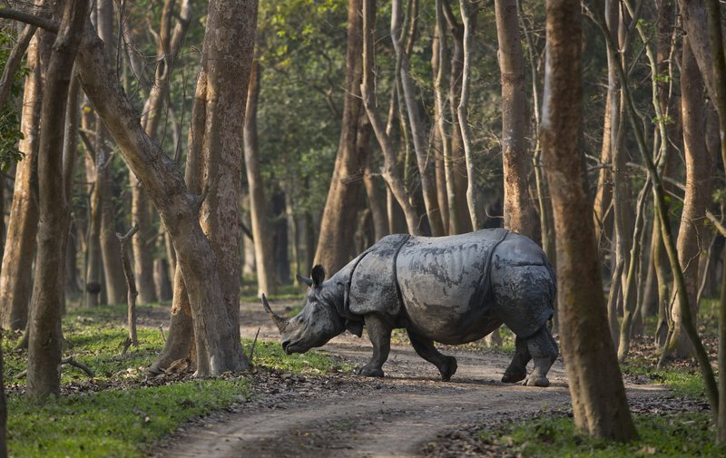 Indian Wildlife Sanctuary Sees Jump In One Horned Rhinos