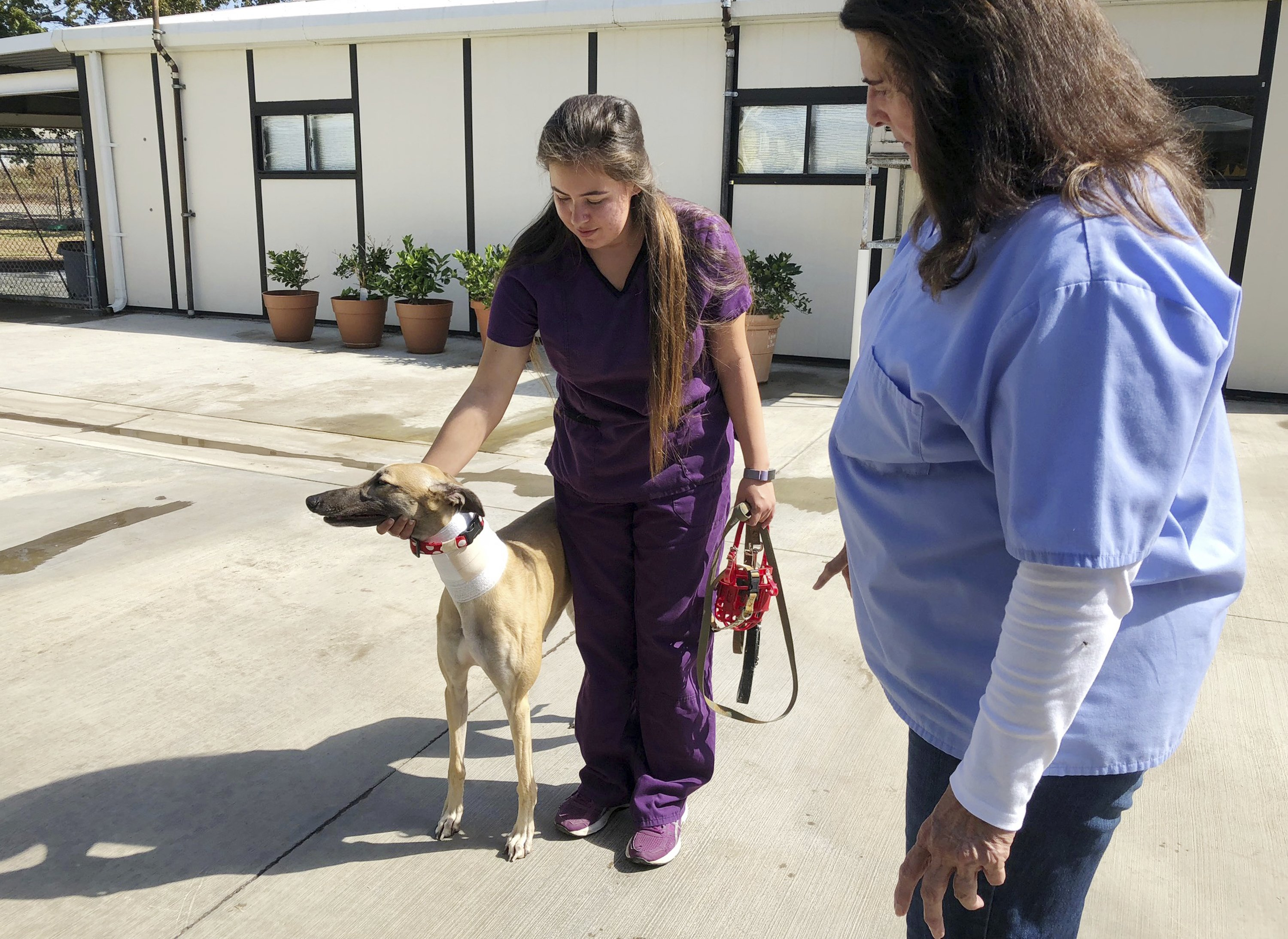 California canine blood bank disputes PETA abuse claims - Associated Press (press release) (blog) 1