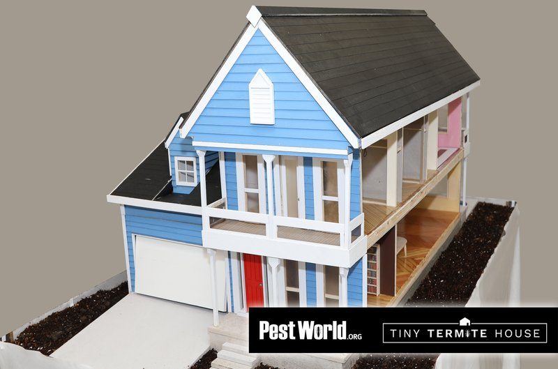 Tiny Termite House: How Termites Destroy from the Inside Out