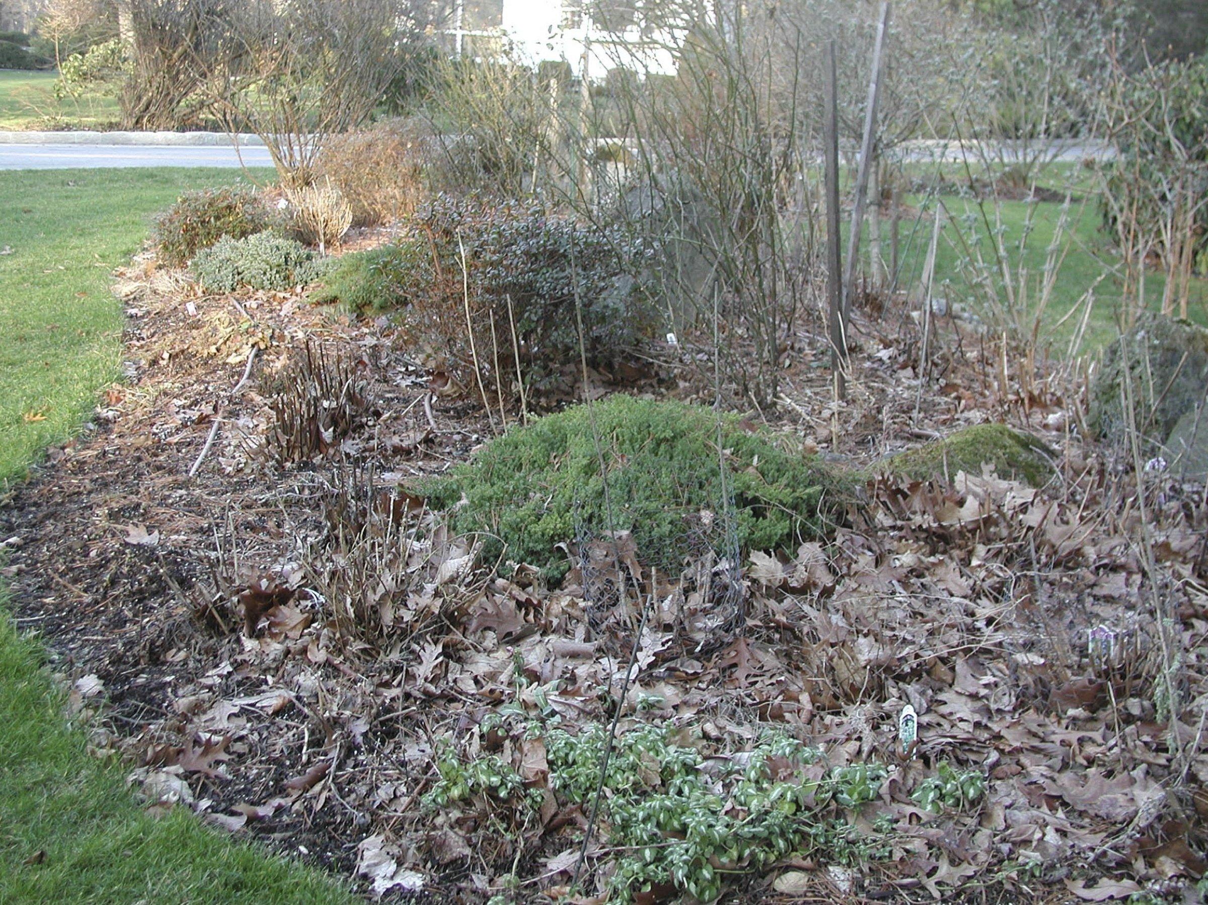 For 'weedless gardening' next spring, begin now