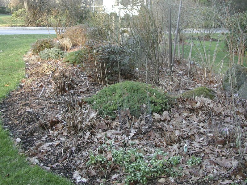 This Undated Photo Shows A Mulched Flower Bed In Scarsdale, N.Y. The Leafy  Mulch Covering This Flower Bed Provides Many Benefits, Not The Least Of  Which Is ...