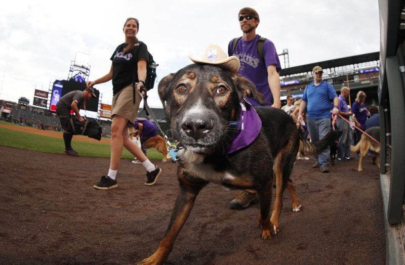 Bark in the park dog, r m
