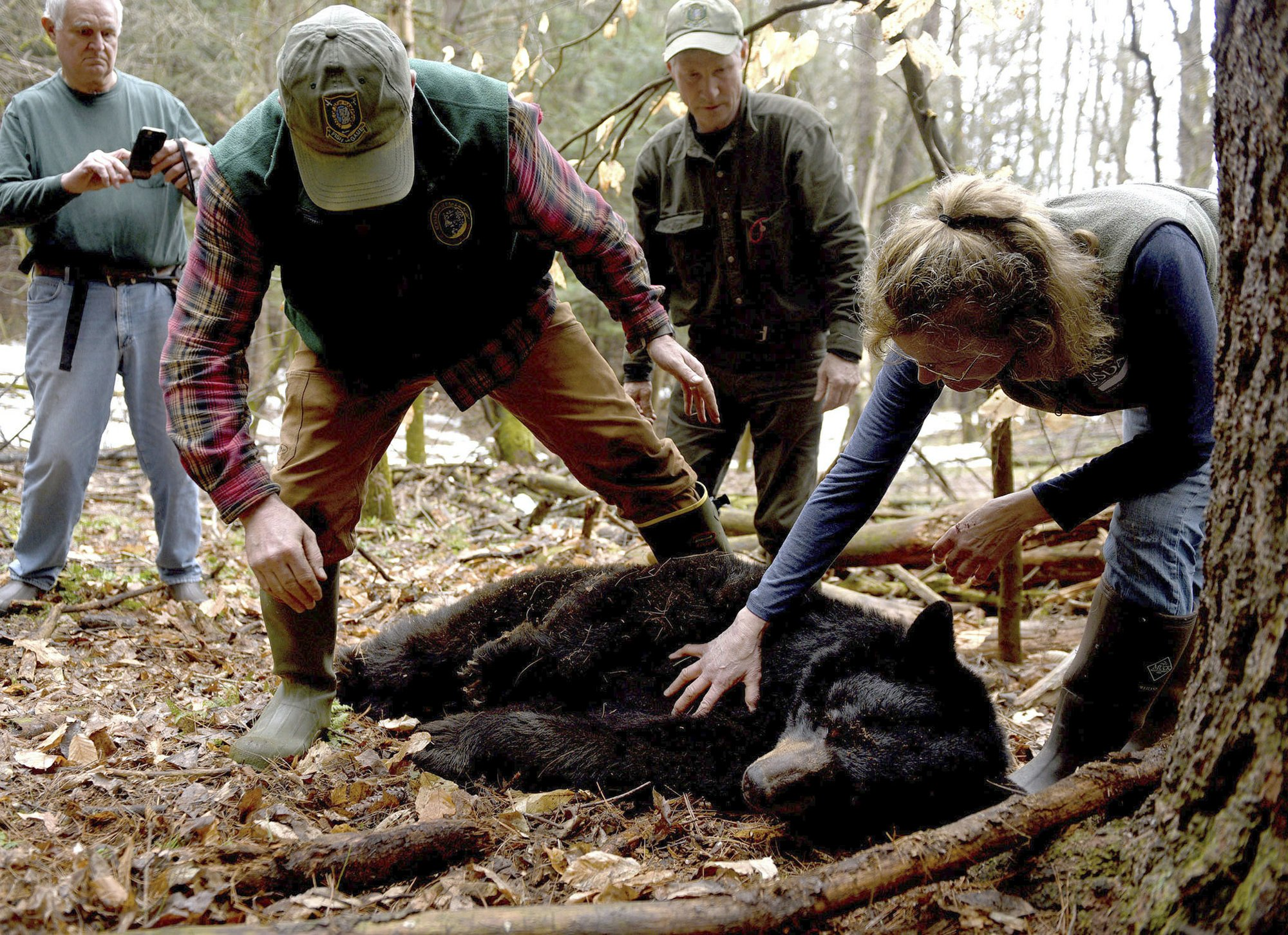 After long journey, bear spared by governor returns home