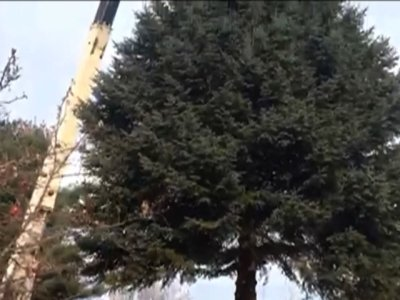 VT Christmas Tree Has Special Meaning to Family