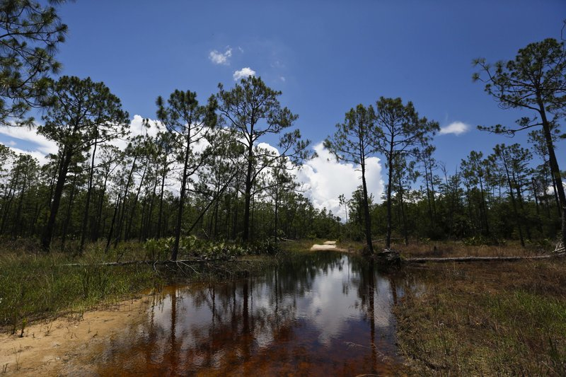 Trump's move to redefine water rule threatens wetlands banks