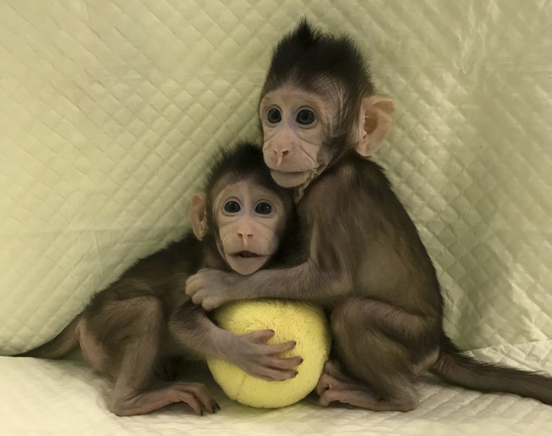 Scientists successfully clone monkeys; are humans up next? (apnews.com)