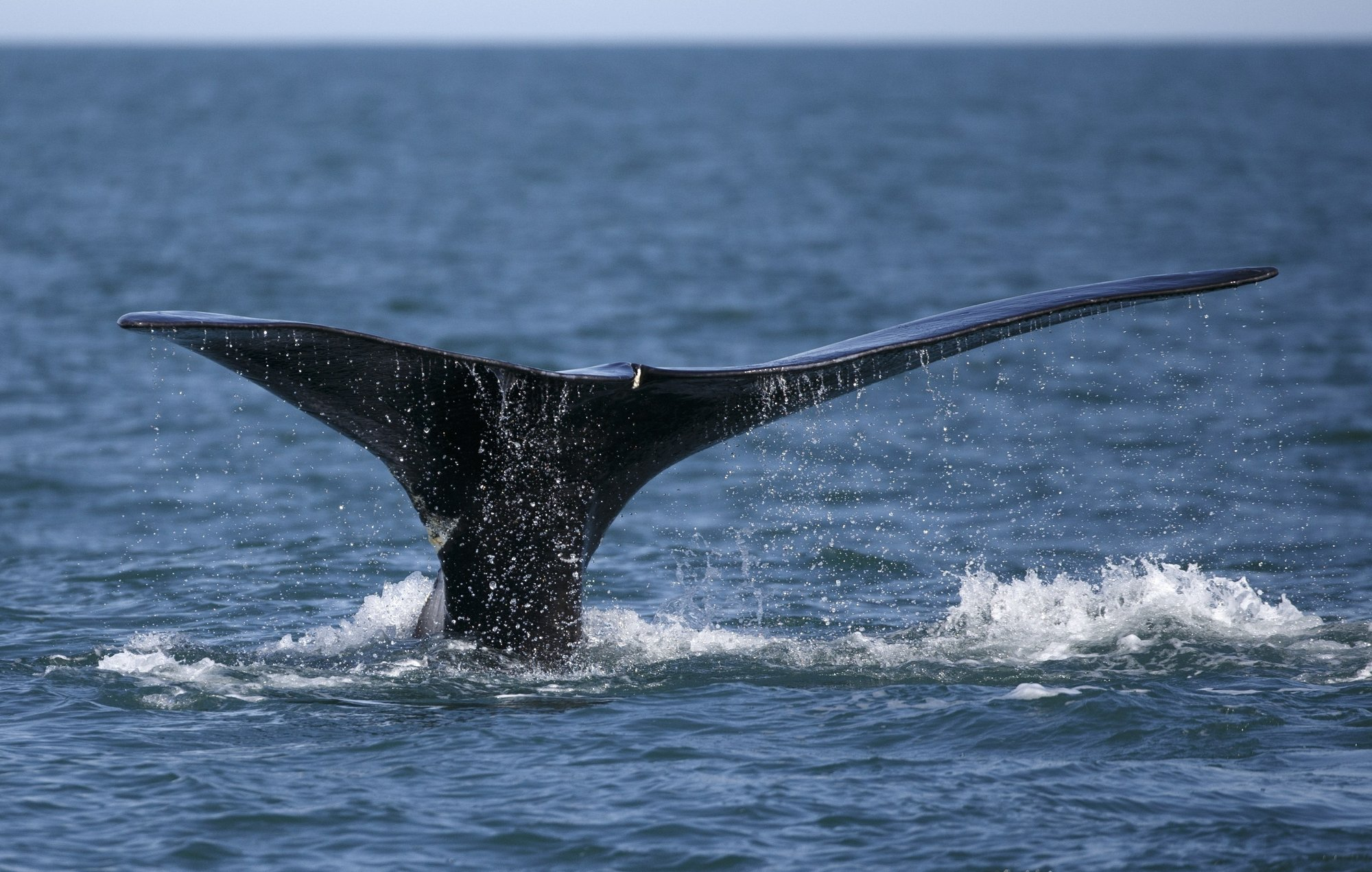 Protection of rare whale, fishing rules on agenda this week