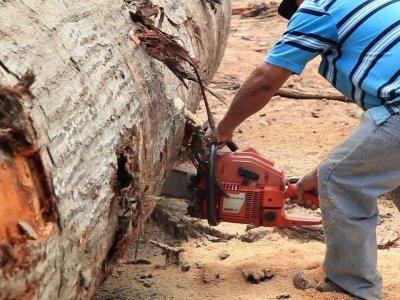 Illegal Amazon Logging Crusader Stews in Exile