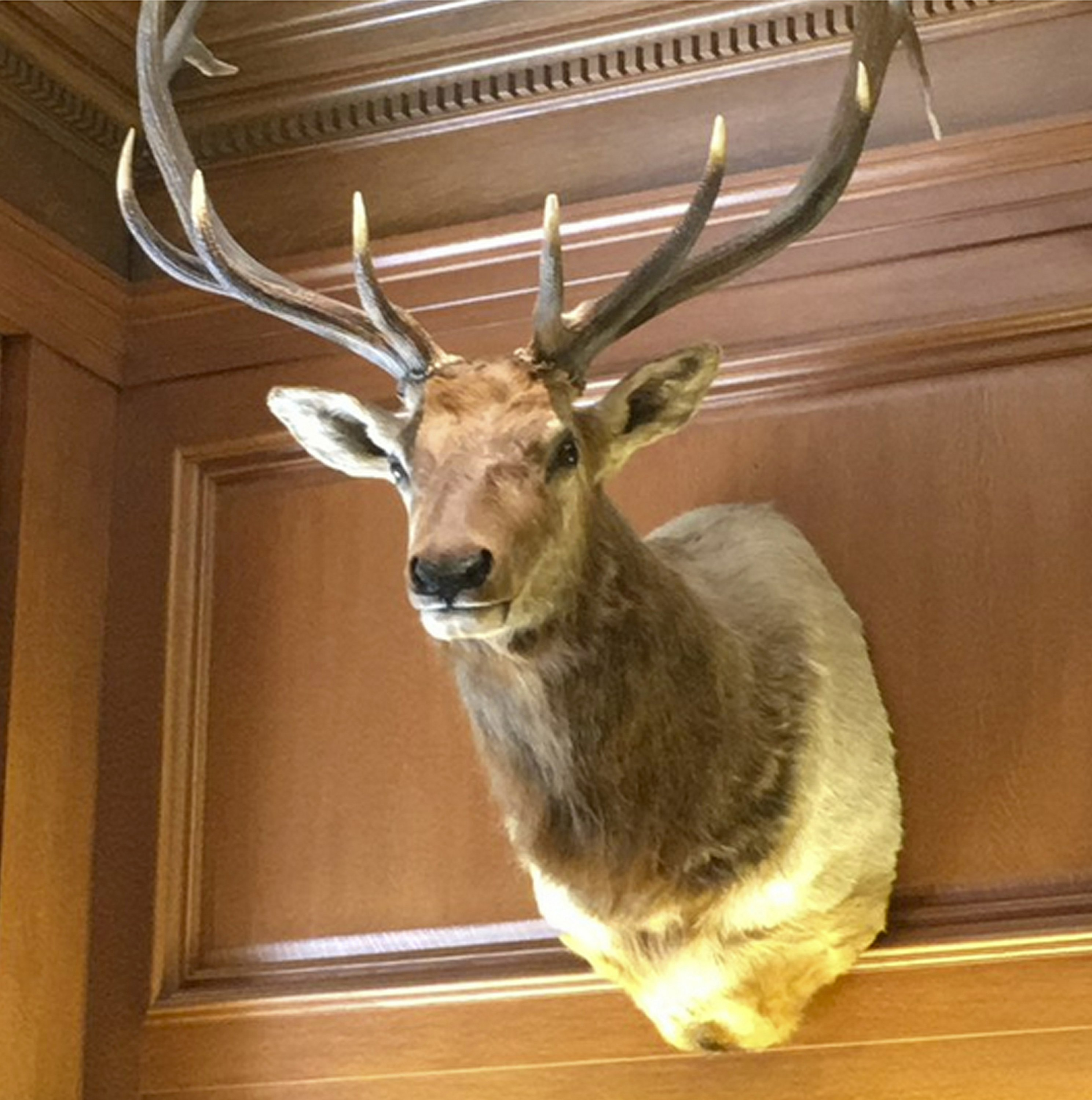 Supreme Court's newest justice has an elk as an office mate