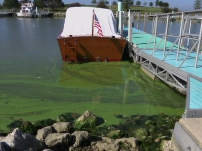 Toxic Algae Abounds Despite Prevention Efforts
