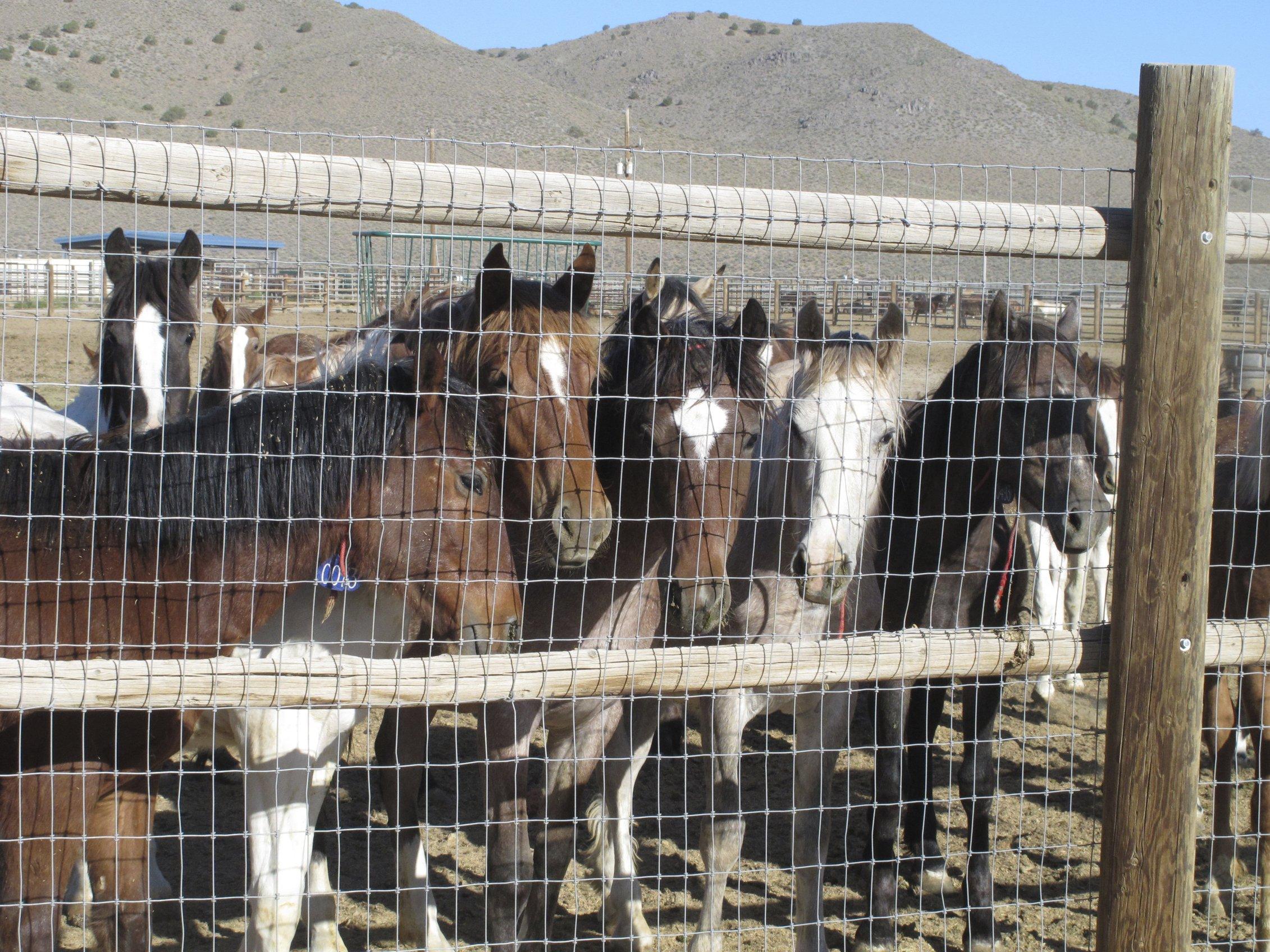 APNewsBreak: Agency built pen for possible horse slaughter