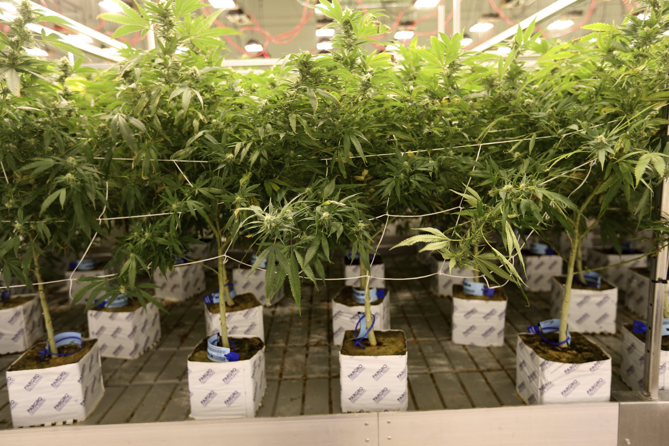 Rural Nevada not embracing legalized recreational marijuana