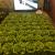 オランダ最先端の施設栽培技術が目白押し!—Horti Contact—展示会レポート