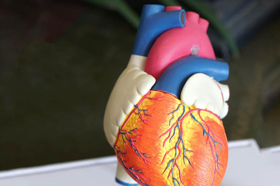 22 Amazing Reasons to Become a Cardiovascular Technologist