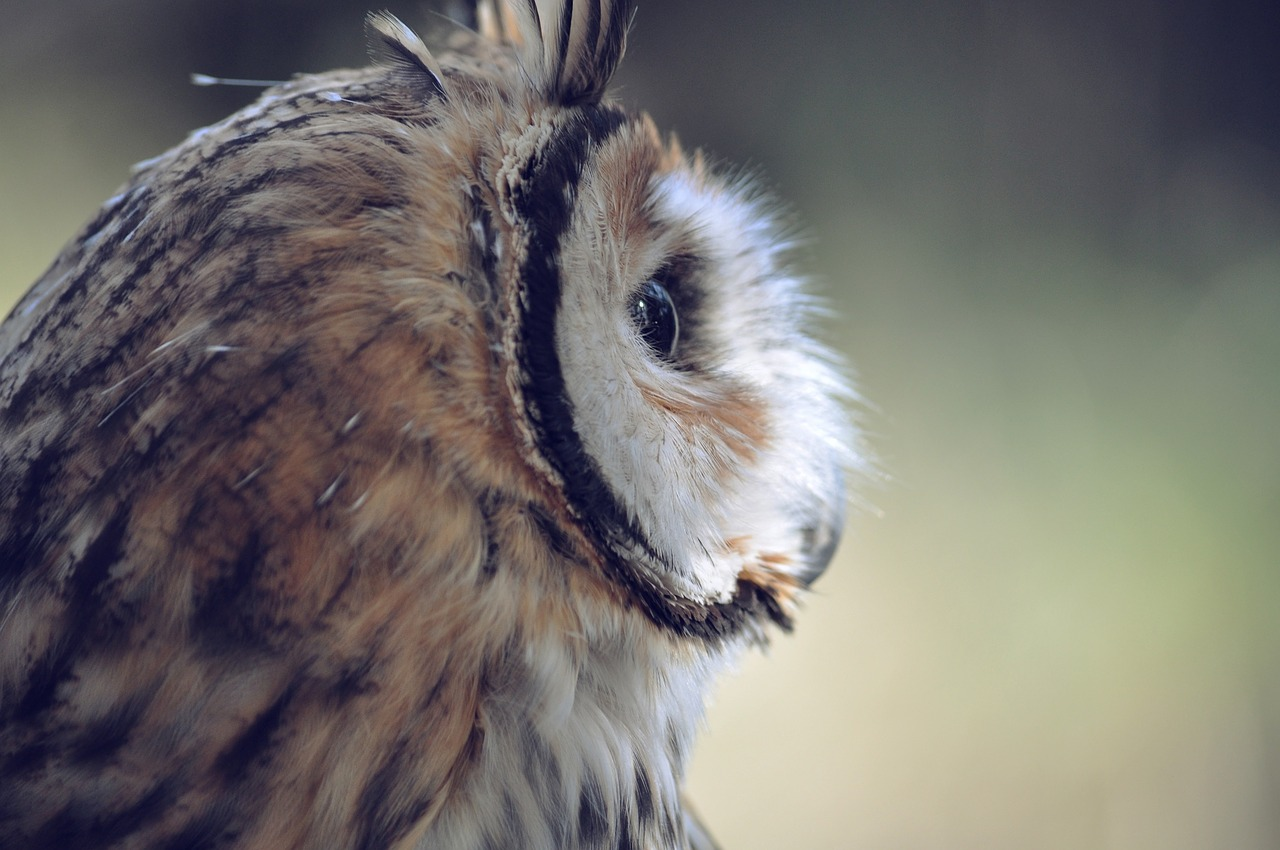 The Cancer is wise as an owl
