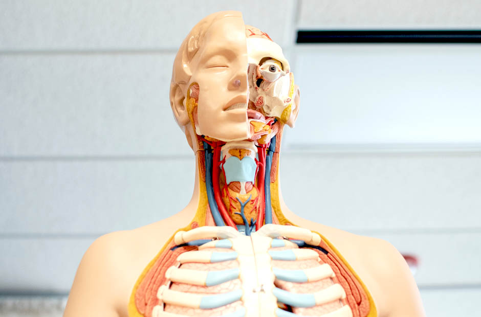 Become an Expert of Human Anatomy - AIMS Education