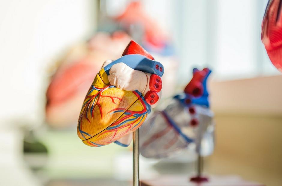 Cardiac-Sonography