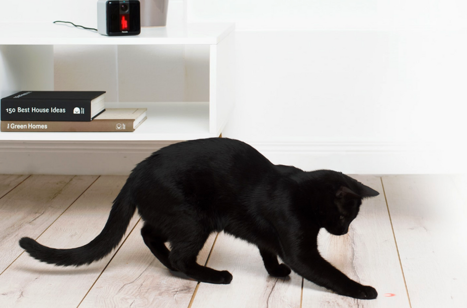 Petcube Play, Black cat