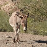 Caught on Camera: Construction Crew Rescues Burro From Sinkhole