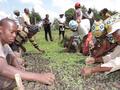 Planting indigenious tree seedlings along rivers